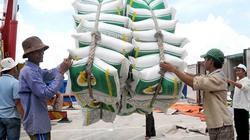 Gạo chất lượng cao áp đảo trong cơ cấu giống