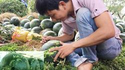 """Lạ: Lần đầu tiên tổ chức lễ hội dưa hấu tại """"thủ phủ"""" dưa Quảng Ngãi"""