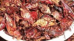 Hết hồn với đặc sản côn trùng Mexico
