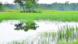 Tin vui: Vườn quốc gia Lò Gò - Xa Mát được đề cử Ramsar