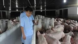 Thịt lợn an toàn: Thay sợ hãi, hãy sống chung dịch tả lợn châu Phi