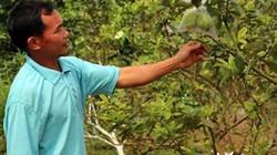 Hội ND Sông Lô: Đánh thức tiềm năng vùng gò đồi, thu nhập tăng cao