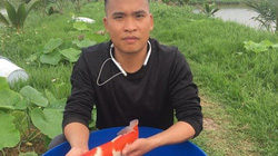 Hải Phòng: Kỹ sư bỏ lương cao về quê nuôi quốc ngư Nhật Bản
