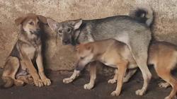Vụ chó cắn cả nhà ở Hòa Bình: Thêm 1 người tử vong