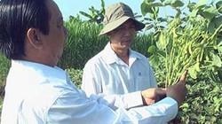 Trồng 14 công đậu nành rau, chưa bao lâu đã thu về 200 triệu