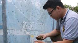 Đắk Lắk: Cử nhân về quê nuôi...ruồi, lấy ruồi nuôi gà, nuôi lươn