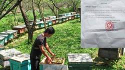 """""""Cưỡng chế"""" đàn ong ở Phú Thọ: Có liên quan đến lợi ích kinh tế?"""