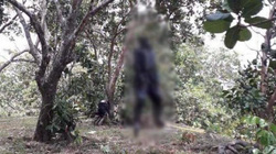 Lâm Đồng: Phát hiện thi thể nam giới phân hủy trong vườn điều