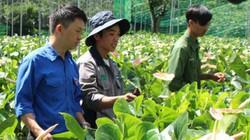 """Lâm Đồng: Thay cà phê bằng loài hoa này, cứ 1 sào """"bỏ túi"""" 100 triệu"""
