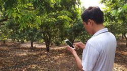Ngưỡng mộ: Dân vùng cao Sơn La chăm cây bằng điện thoại, thu tiền đô đều đều