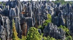 Tìm về tuổi thơ khi ghé thăm Hoa Quả Sơn của Tề Thiên đại thánh