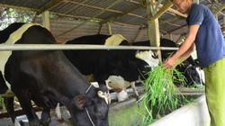 Cạnh tranh yếu, nông sản TP.HCM vào chuỗi đếm trên đầu ngón tay