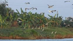 3.000 ngày canh giữ, biến đảo hoang thành nơi chim bay, cá lượn