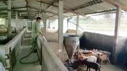 Trang trại trên lợn, dưới cá, vịt bơi tung tăng thu 300 triệu đồng