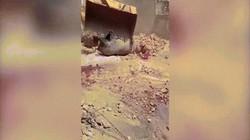 Video: Phẫn nộ cảnh thợ săn bắn chết hà mã to lớn đi lạc vào làng ở Senegal