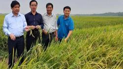Thứ trưởng Bộ NN&PTNT Lê Quốc Doanh thăm mô hình liên kết sản xuất giống lúa BC15 tại Quảng Nam