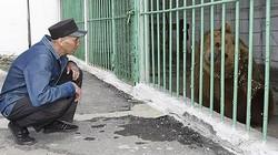Phạm tội nguy hiểm, gấu ngồi tù chung thân tại nhà giam an ninh cực ngặt