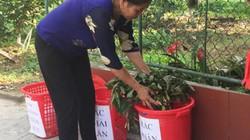 Phụ nữ Hương Khê tham gia phân loại rác từ hộ gia đình