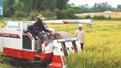 Vụ Đông Xuân miền Trung- Tây Nguyên: Năng suất lúa đạt tới 6 tấn/ha