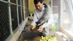 Quảng Ngãi: Ham nuôi loài nhìn ghê, bán giống 5-7 triệu/con