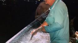 Đồng Tháp: Cả đêm náo nhiệt săn cá bông lau đặc sản dưới sông