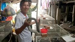An Giang: Nuôi nhốt bầy rắn hổ hèo, bán 300-400 ngàn đồng/ký