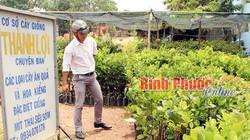 Giá mít Thái cao ngất, dân đổ xô lùng mua cây mít giống
