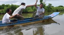 Cà Mau: Vô rừng nuôi cua, lời 130 triệu/tháng, bắt toàn con to bự