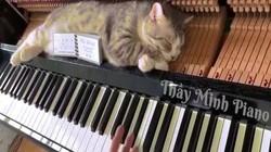 Clip mèo béo ú nằm ngủ trên đàn dương cầm gây bão mạng