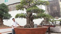 Bộ sưu tập khế cổ độc nhất vô nhị ở Việt Nam của đại gia Phú Thọ