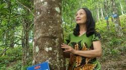 """Lạng Sơn: Chi 900 triệu để """"hữu cơ hóa"""" loài cây ra hoa thơm lừng"""