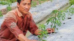 Trồng bí đao, trồng ớt sừng vàng thu 200 triệu mỗi năm