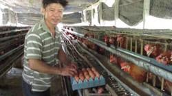 Trên nuôi gà siêu đẻ, dưới cá lúc nhúc, bỏ túi mỗi năm gần 1 tỉ