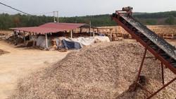 Quảng Trị: Chưa được cấp phép, nhà máy dăm gỗ vẫn ngang nhiên hoạt động