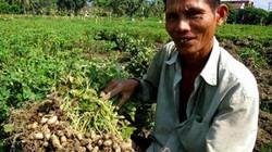 """Đậu phộng """"đẻ"""" lãi gấp 5 lần trồng lúa, chỉ 1 huyện đã thu 370 tỷ"""