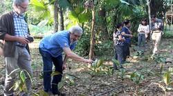 Trồng loài cây thuốc quý, bán 350 ngàn/kg, khách Tây tới xem
