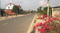 Quảng Trị: Điều tra nhiều vụ trộm hoa giấy bất thường
