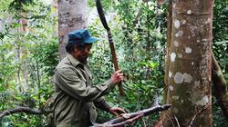 Kỳ nhân 30 năm giữ rừng lim quý không công ở Cồn Linh
