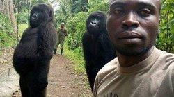 Bầy khỉ đột nặng 2 tạ chụp ảnh selfie như người gây kinh ngạc ở Congo