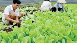 Làm ăn có lãi, nhiều nông dân xin vào HTX nông nghiệp kiểu mới