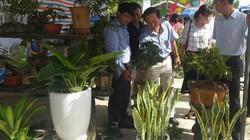 Đà Nẵng: Lập 40 chi, tổ hội nghề nghiệp giúp ND phát triển kinh tế
