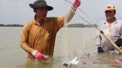 Quảng Nam: Theo con nước săn đàn cá đối ngược sông Hòa An