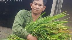Làm giàu ở nông thôn: Cắt cỏ dại nuôi con nhiều sao mà xây nhà lầu