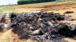 """Chưa """"làm luật"""" bảo kê cánh đồng, bị côn đồ đốt 950 cuộn rơm"""