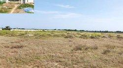 Lạ đời: Thuê từng mét đất trồng hành tỏi nhưng lại bỏ hoang 32.000m2