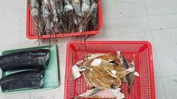 Bí mật động trời trong thùng hàng chứa tôm hùm, cá khô