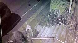 """Video: 6 con chó """"đánh hội đồng"""" một con mèo và diễn biến khó tin"""