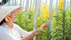 Bỏ ra 13 triệu USD nhập hoa lan, nhưng chật vật thu về hơn 4 triệu