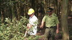 Thành lập Văn phòng Chứng chỉ rừng, ít nhất 2 triệu ha rừng có chứng chỉ