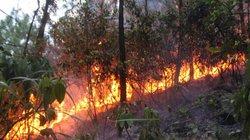 Nắng nóng gay gắt, cháy rừng nhiều nơi, Thủ tướng ra công điện gấp